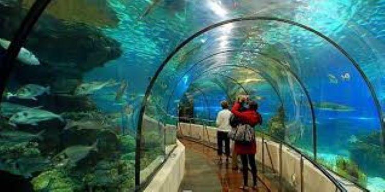 Antalya Aquarium & Tunektepe Cable Car for Disabled